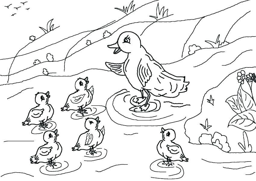 Vịt mẹ và bầy vịt con bên ao nước