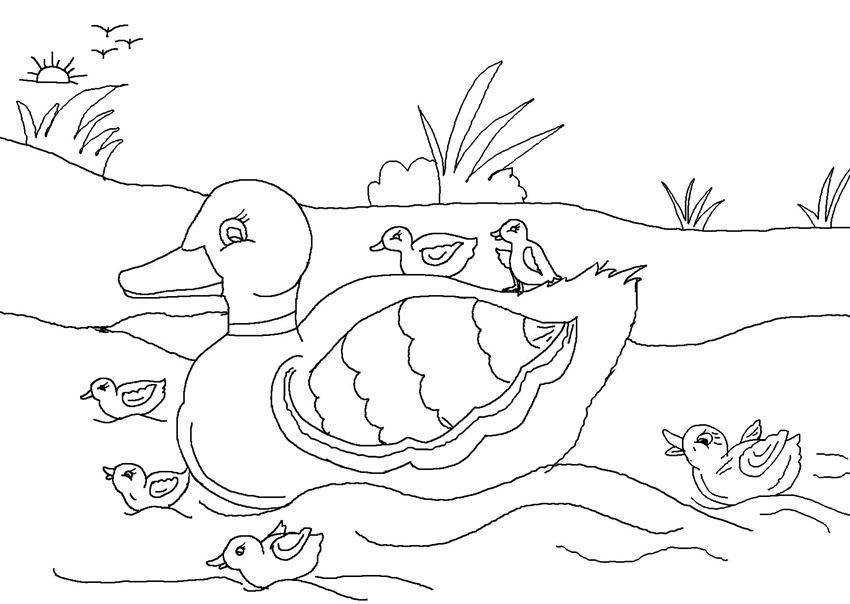 Vịt bơi dưới ao