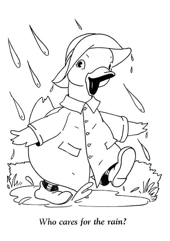 Vịt mặc áo mưa đi dưới trười mưa