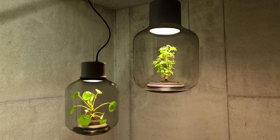 Đèn trồng cây quang hợp