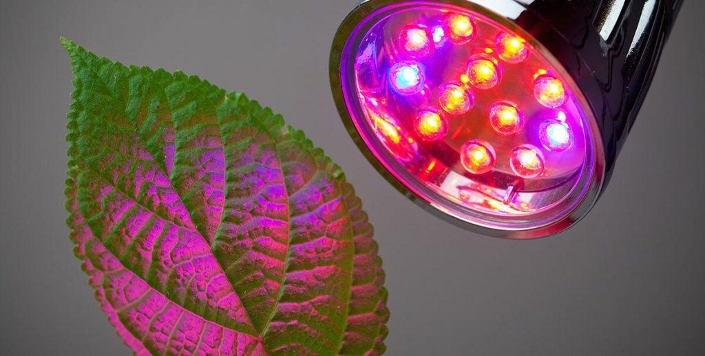 Đèn quang hợp cho cây trồng