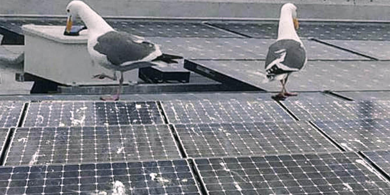Vệ sinh tấm năng lượng như thế nào?